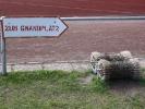 letzte Fotos des Grandplatzes